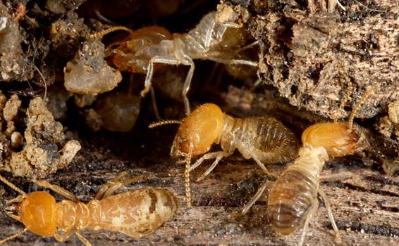 The Pest Control Company