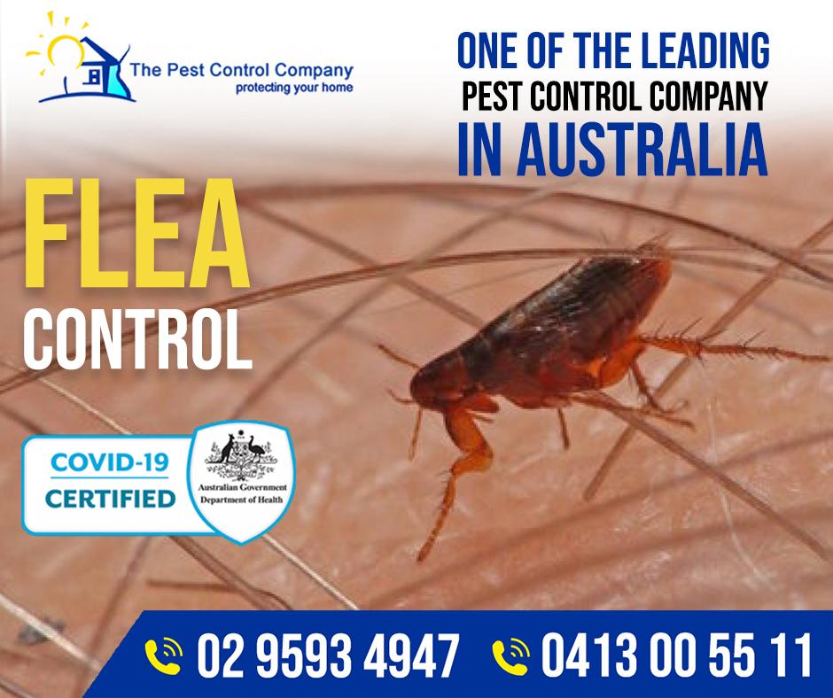 Flea Control Sydney