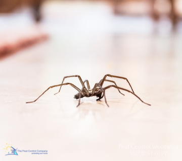 Ants Pest Control Woollahra