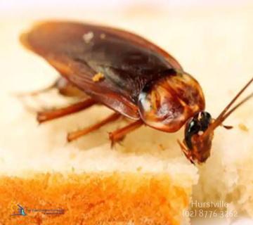 Mice Pest Control Hurstville