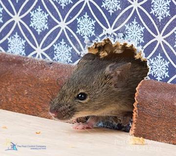 Pest Exterminator Woollahra