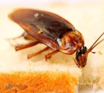 Pest Inspection Sans Souci
